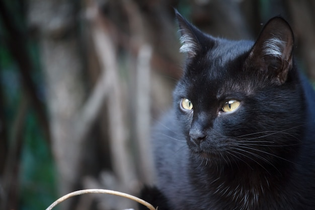 Close-up black shorthair cat with yellow eyes sits on the roof of the shed and carefully looks around