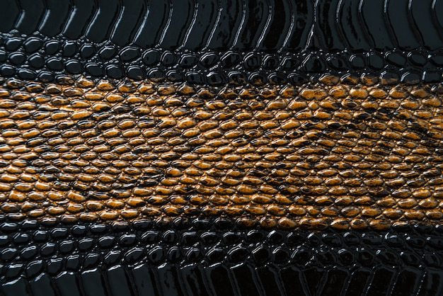 Close up of black snake texture