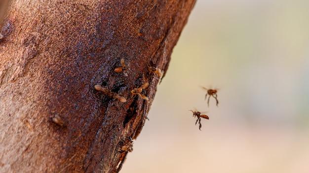 Крупным планом черная пчела без жала в дереве