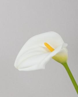 咲く花をクローズアップ