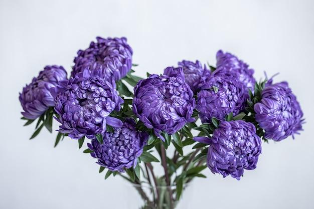 Close-up di crisantemi blu in un vaso su uno sfondo bianco sfocato.