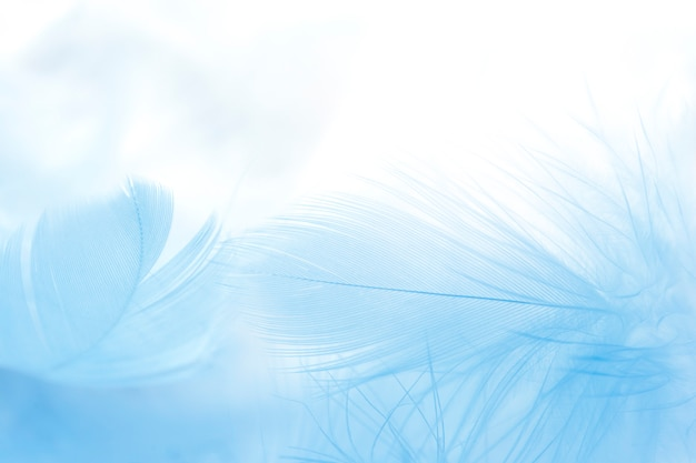 Close up blue feather background