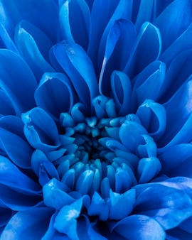 Close-up blue petals macro nature