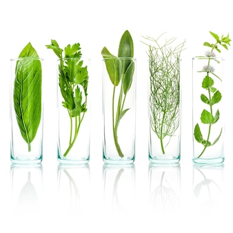 Close up bottles of fresh aromatic herbs  isolated on white background.