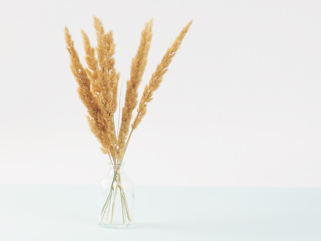 Close up bouquet of dry spikelets on pastel blue background..