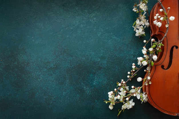 Close up of branch of blossoming cherry and violin on blue background