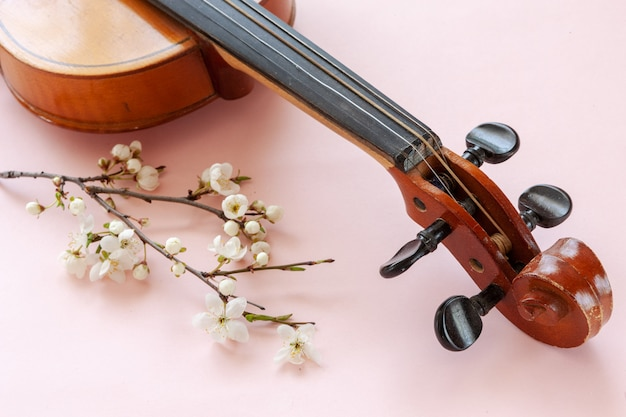 Close up of branch of blossoming cherry and violin on pastel candy pink background