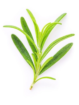Close up  branch of fresh rosemary isolated on white background top view.