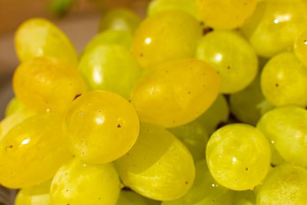 Крупным планом ветви изюма винограда