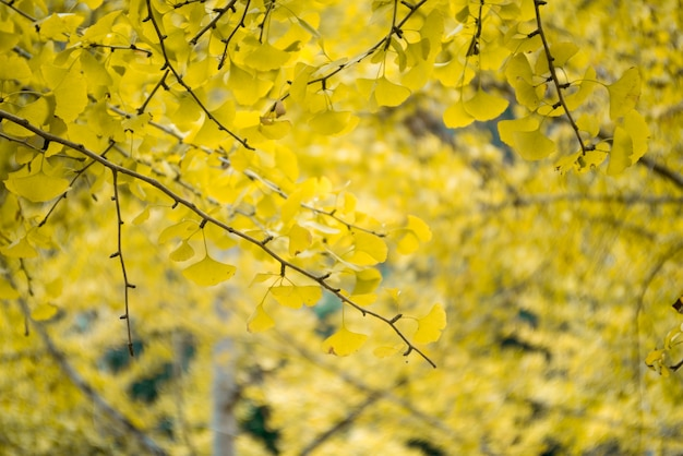 Close-up of branches with yellow leaves