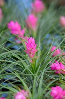 Close up of bromeliad flower  beautiful flowers