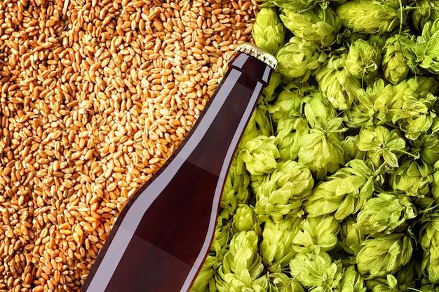 밀 곡물 및 홉 배경에 대각선 배치 bottlle와 갈색 맥주 모형을 닫습니다. 유리에 반투명 라벨 조각이 있습니다. 쇼케이스를위한 tempalte 준비.