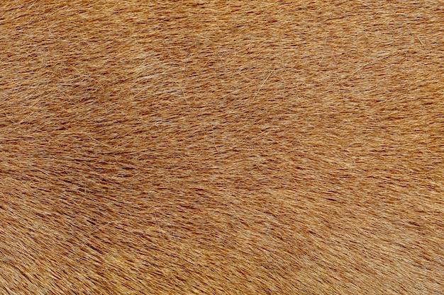 Close up brown dog skin