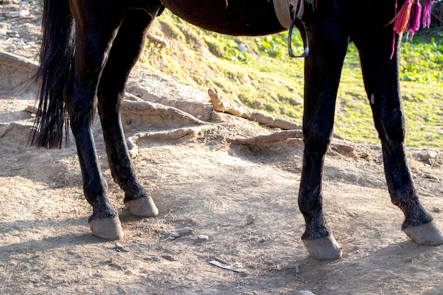 Close up of brown horse hind legs and hoofs
