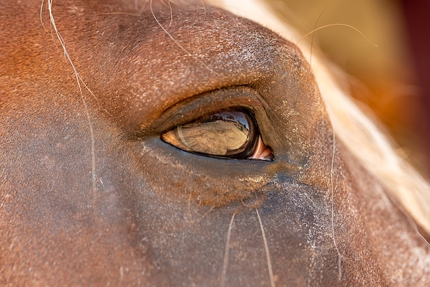 Close-up of a brown horse's eye. in the summer at the stable. horseback riding.