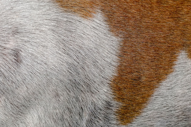 Close up brown and white dog skin
