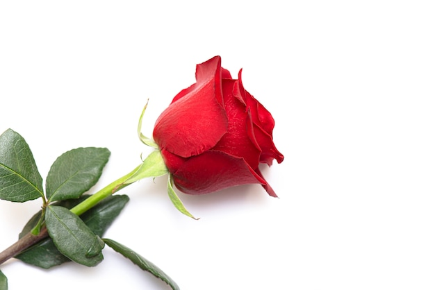Close-up bud of red rose isolated on white