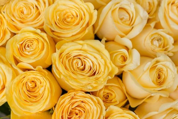 노란 장미의 근접 무리
