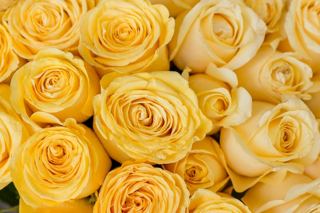 Close-up bunch of yellow roses