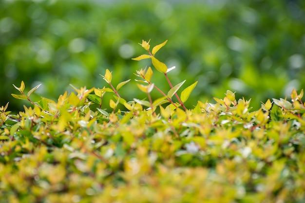 Primo piano di germinazione cespuglio