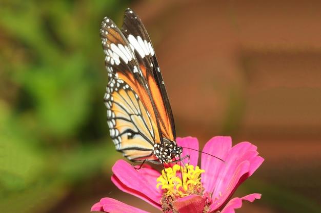 Закройте вверх по бабочке в природе на парке