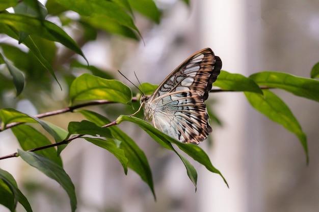 Закройте вверх по бабочке на зеленом листе в саду.