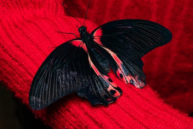 女性の手で蝶を閉じます。自然の美しさ。