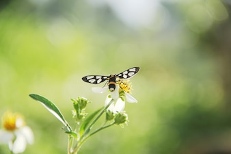 Close up butterfly pollenating of flower with blurred green leaves background in garden.