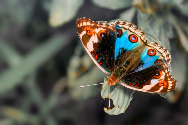 Close-up of butterfly on a twig.