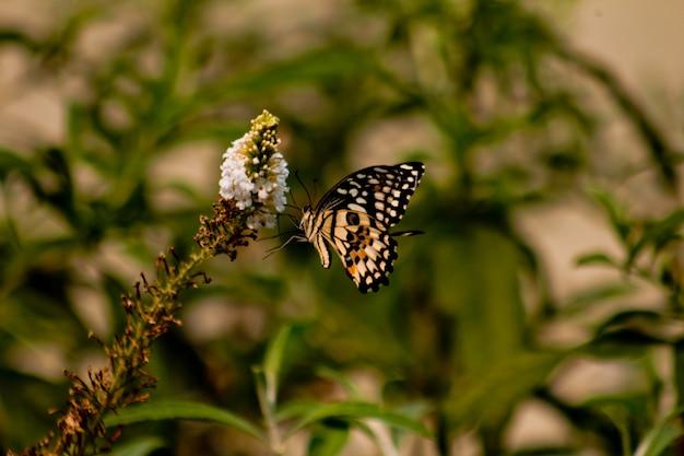 Primo piano di farfalla con un fiore