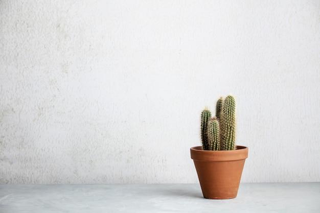 Close up of cactus in ceramic pot against white wall.