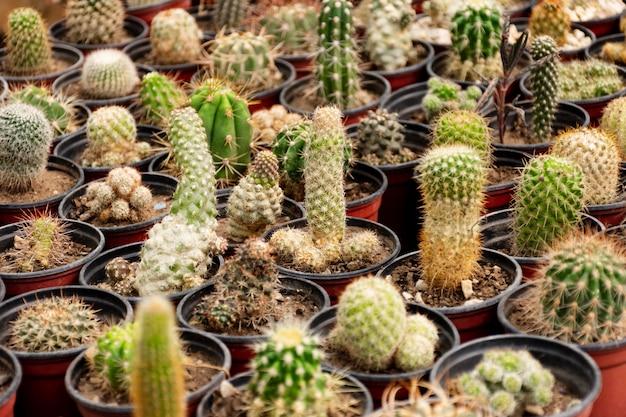 Close up cactus in garden