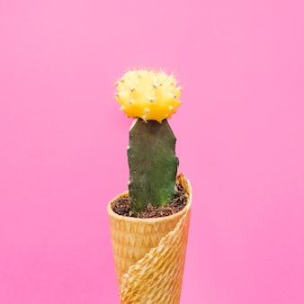 Крупный план кактуса в вафельном конусе