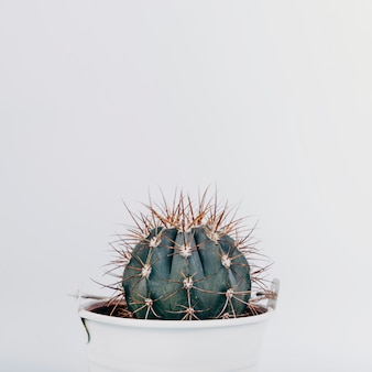Close-up of a cactus plant on white background