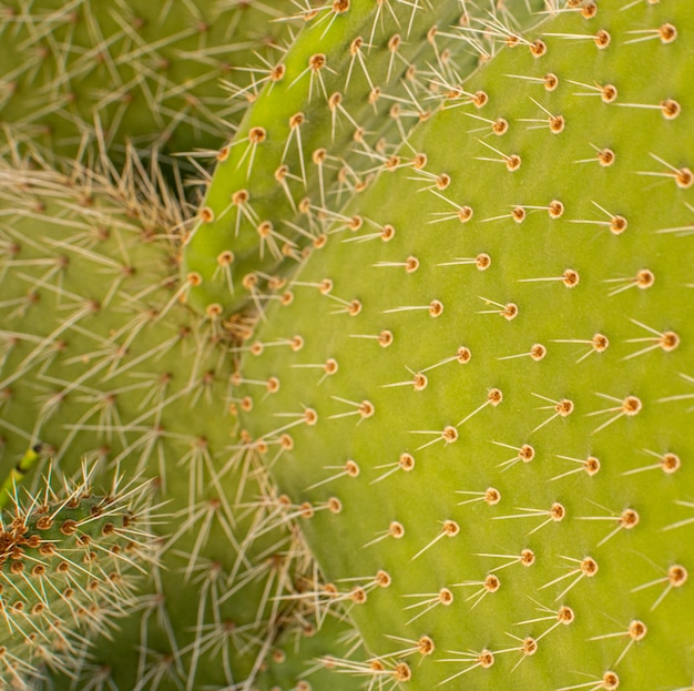 Close-up of cactus plant with spikes