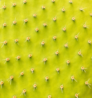 Close-up of cactus plant