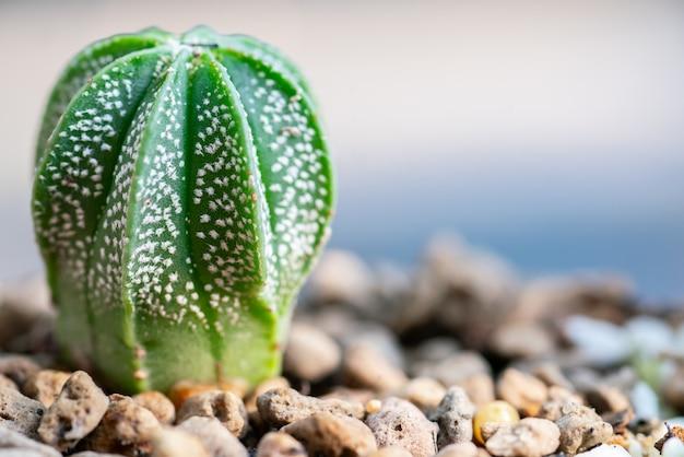 Close up cactus in plant