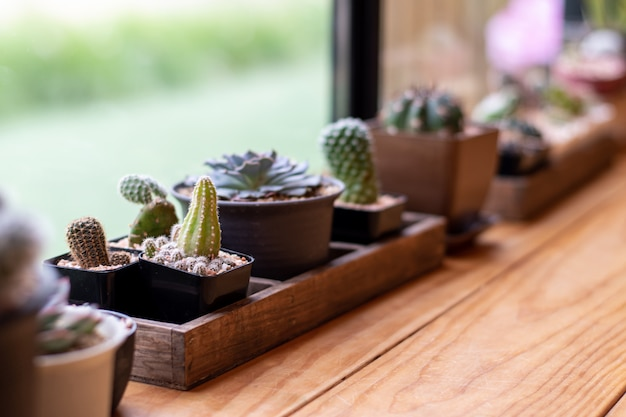 Close-up of a cactus in a small pot near the window for a vintage home decor
