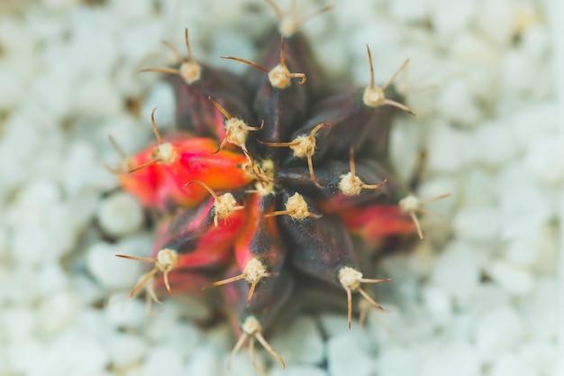 Close up cactus thorns in a ceramic pot