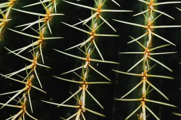 Close-up cactus thorns