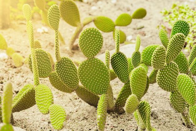 Close up cactus tree in garden