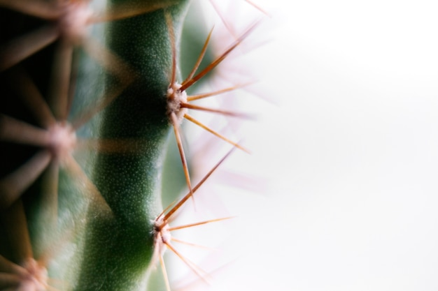 Close-up of a cactus with long thorns