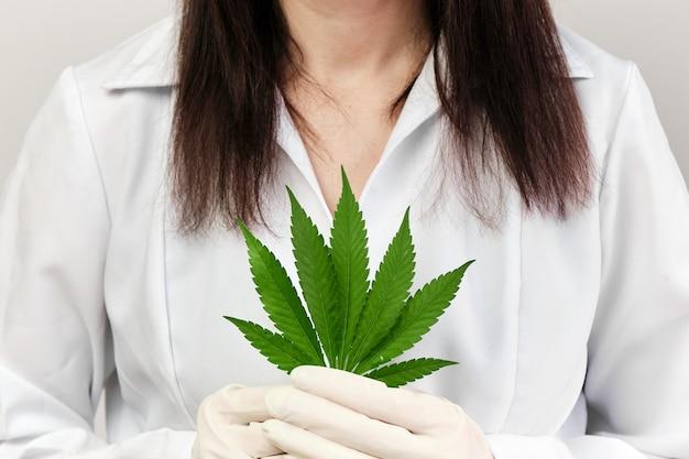 ゴム手袋と白衣を着用した医師または薬剤師の手で大麻の葉を閉じます。健康的なまたはバイオ有機製品の生産には、カンナビノイドが含まれていました。マリファナの合法化