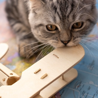 Close-up cat biting an air plane toy