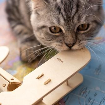 Крупный план кошка кусает игрушку воздушного самолета
