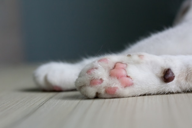 Close up of a cat's paws, lie down on a light wooden table with copy space.