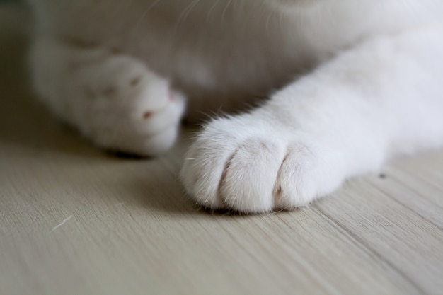 Close up of a cat's paws with blurry background
