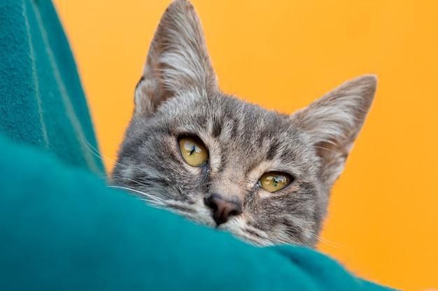 所有者の腕に座っているクローズアップ猫