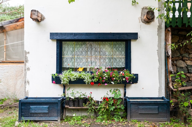 Close-up of a charming window of a white old house with black wooden shutters and decorated with pots of green plants and flowers