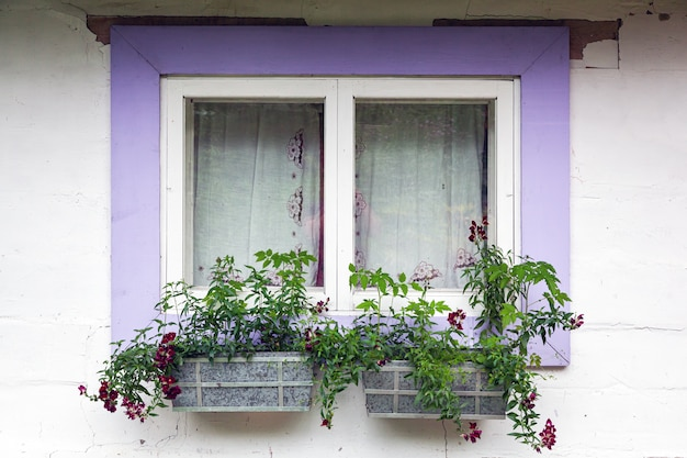 Close-up of a charming window of a white old house with violet wooden shutters